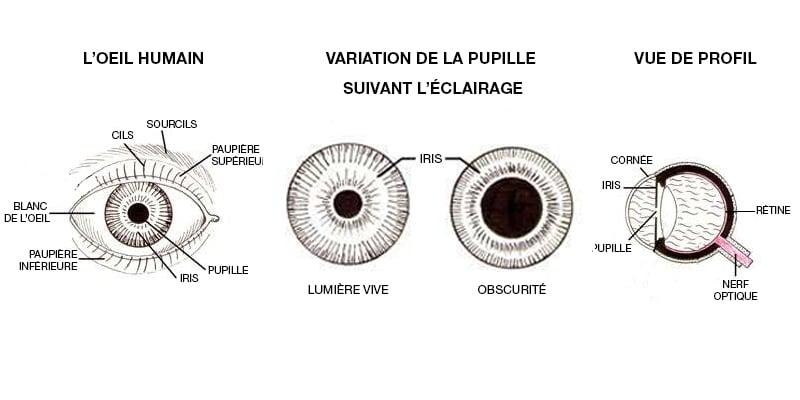 œil humain et éblouissement